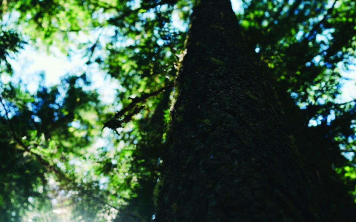 wonderland trail1